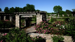 Laura Conyers Smith Municipal Rose Garden. Photo courtesy of KC Parks Department.