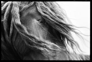 Romanian-born New York-based photographer Roberto Dutesco captures one of the wild horses of Sable Island.