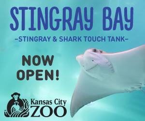 Stingray – Sidebar