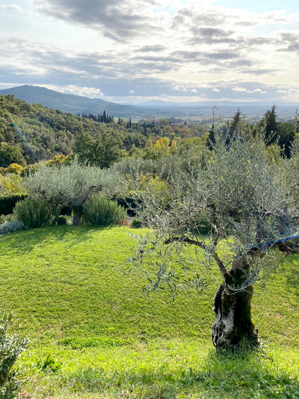 Ancient olive groves  line the ancient paths.
